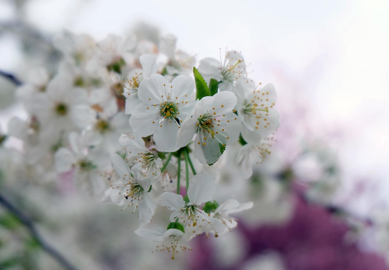 floraison2ld